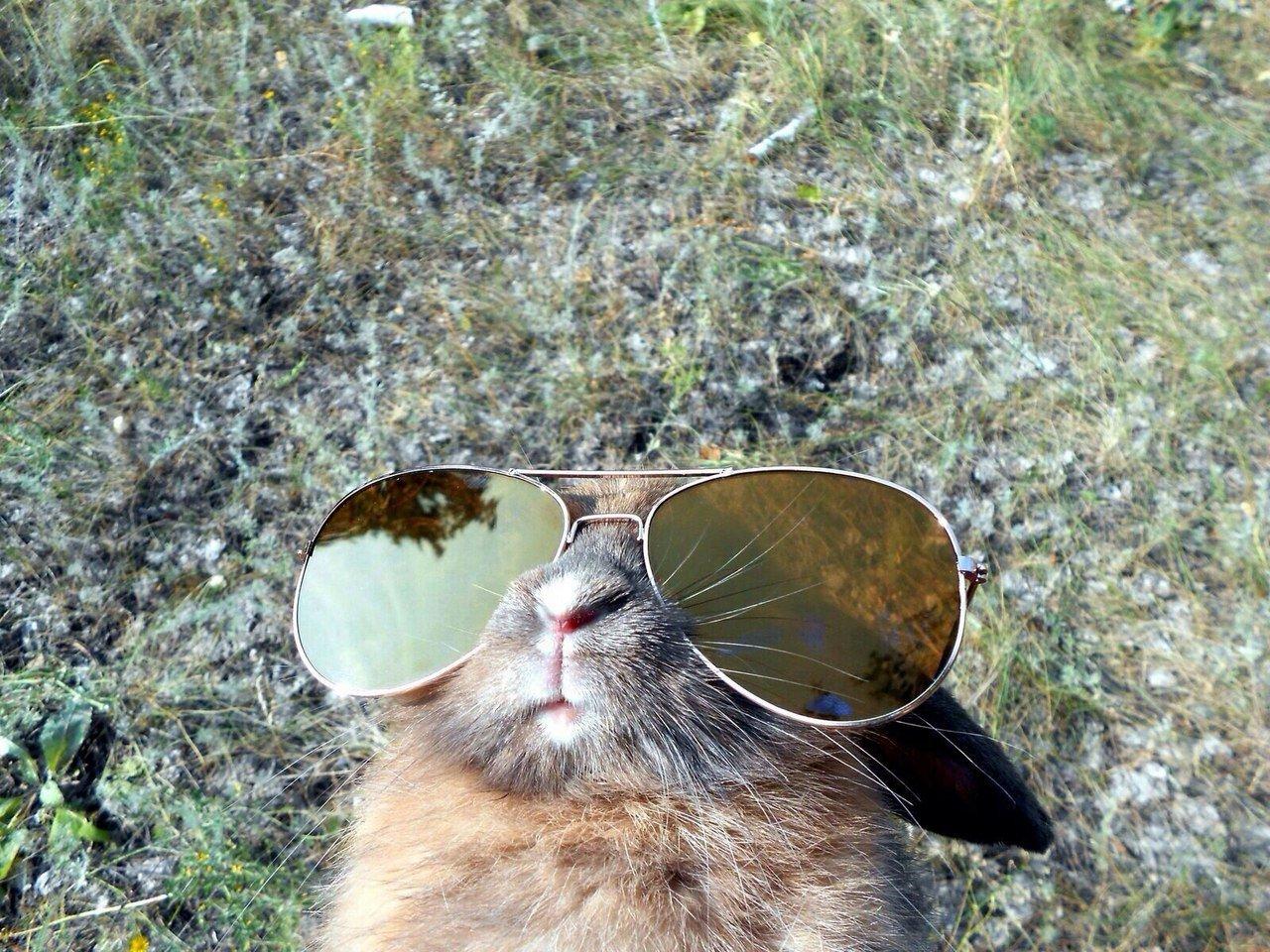 бурундуки картинки зайка в очках фото каждый