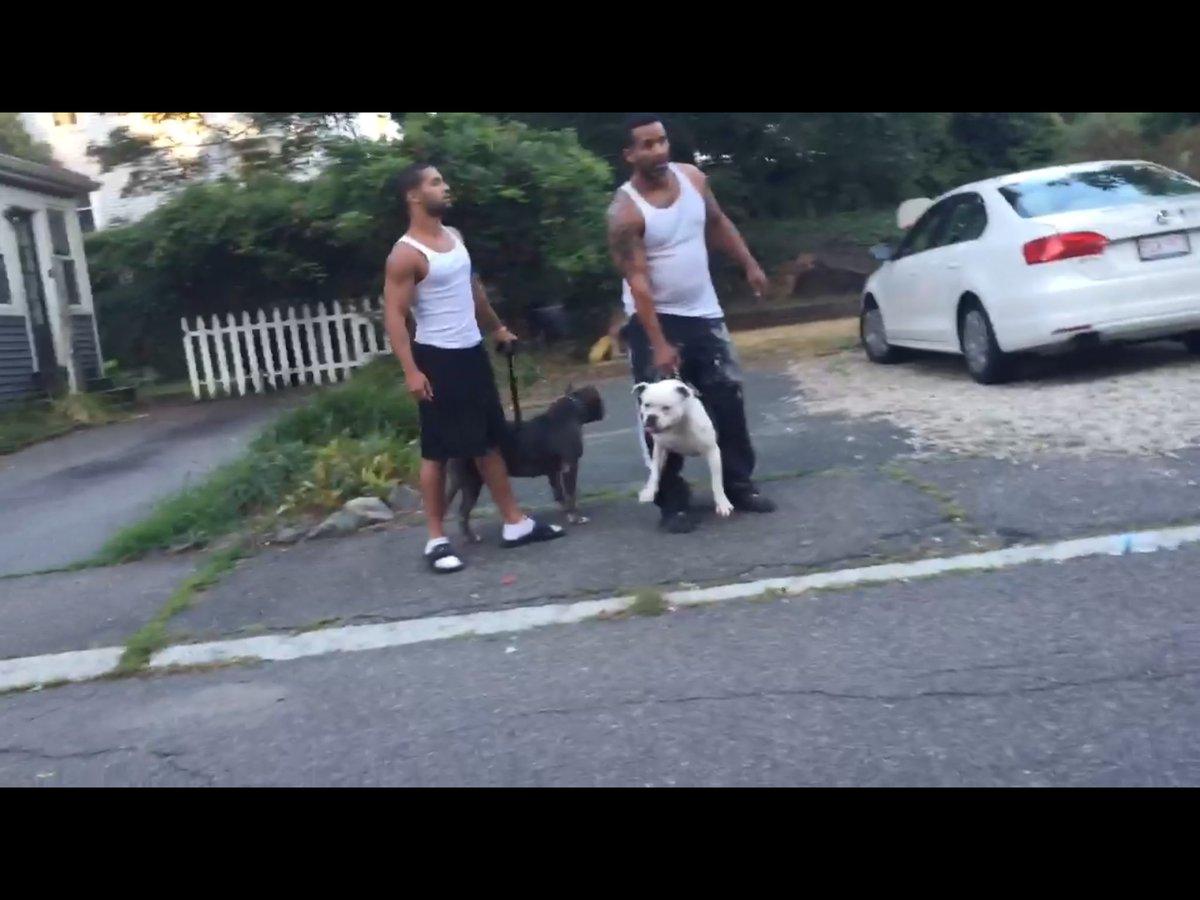 dogs bite decatur al salem ma a neighbor opened their car doors