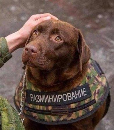 На оккупированном Донбассе тысячи людей отлично себя чувствуют в условиях войны, - нардеп Бригинец - Цензор.НЕТ 6255