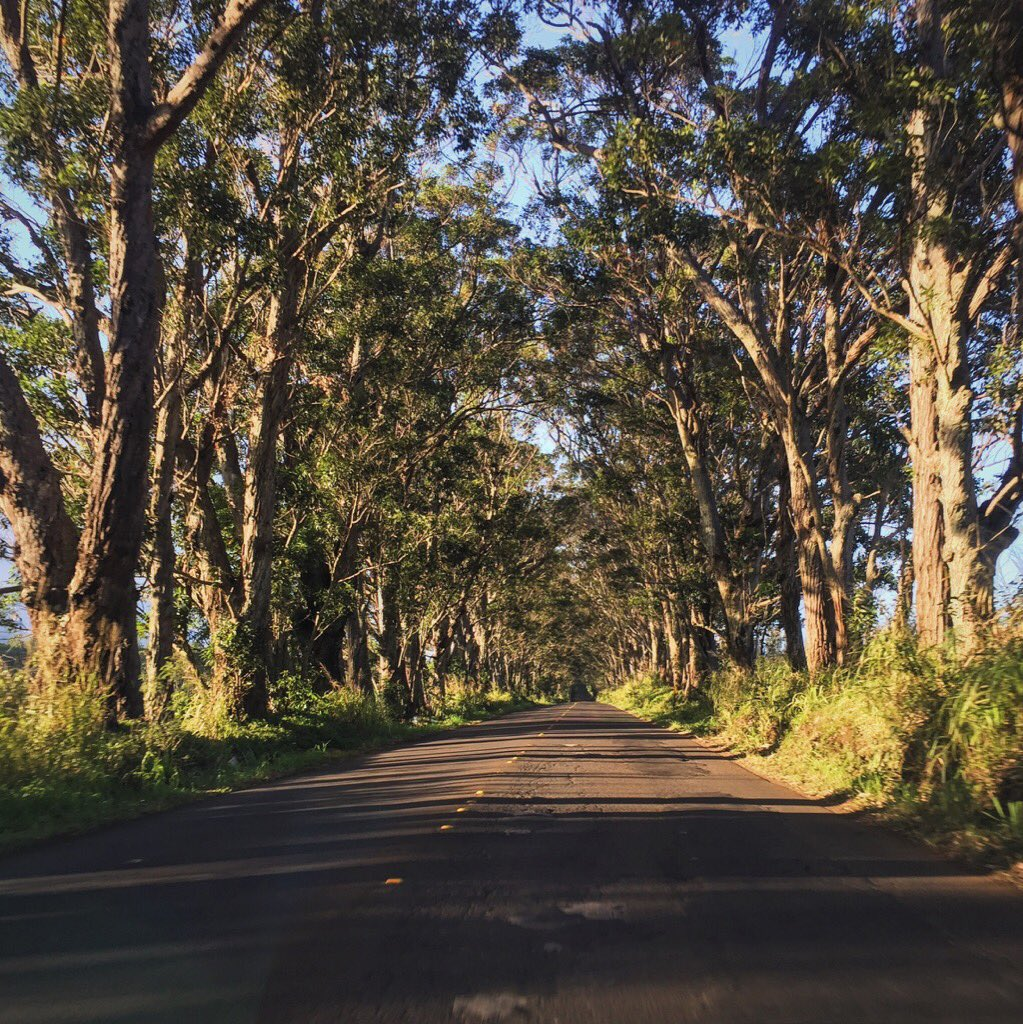 Passing through this picturesque #TreeTunnel means you're close to #Poipu and our resort!