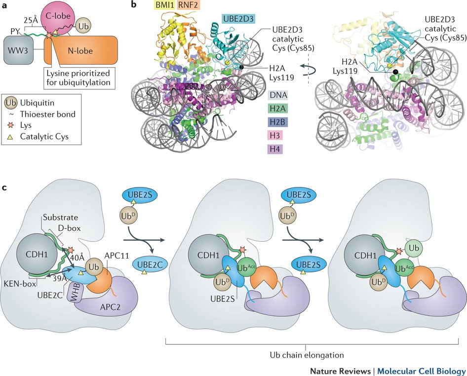 online Sodium Channels and