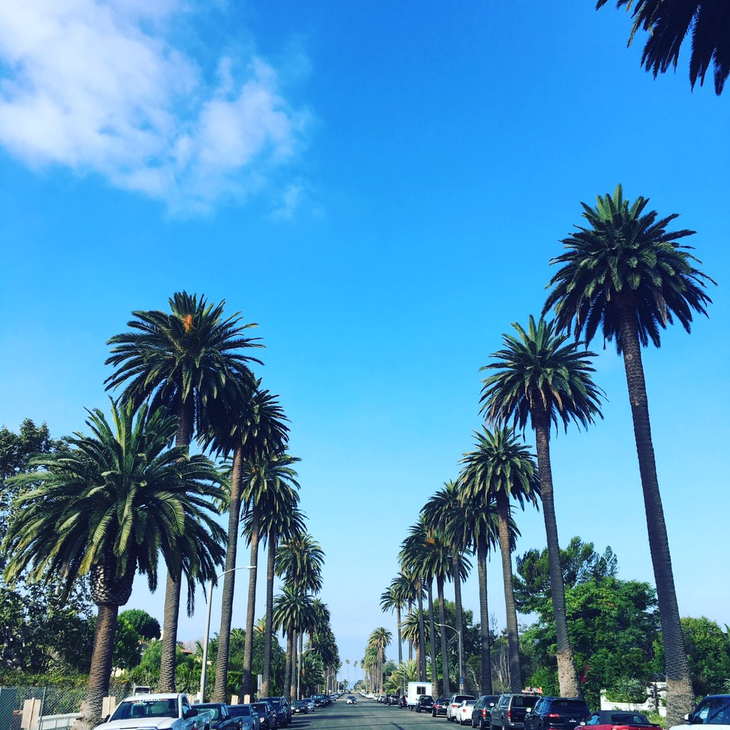 Palm trees + Blue skies all the way to the ocean #SantaMonica #MyDayInLA https://t.co/iz2nvppJoo