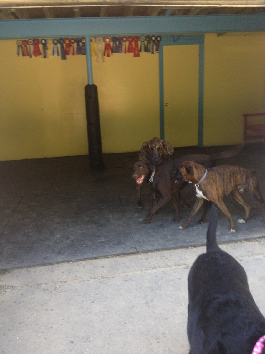 Dozer and Heimdall love playing with Ruthie