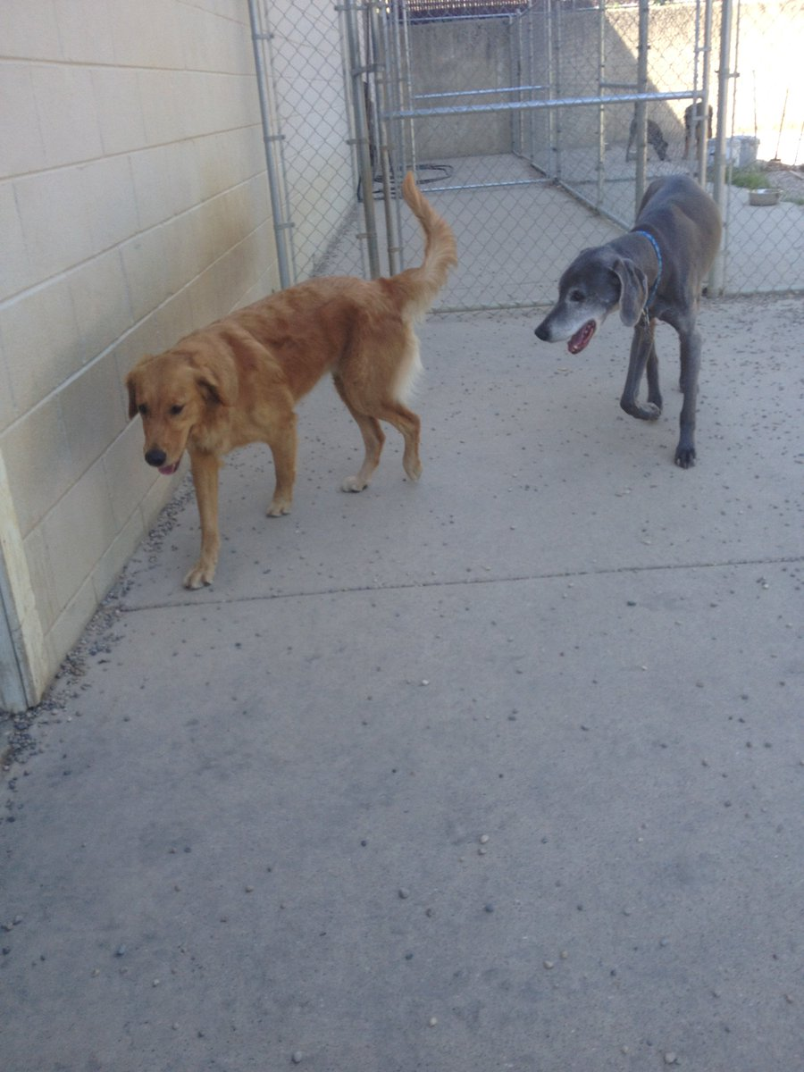 Maggie Mae and Blue T. take a walk together