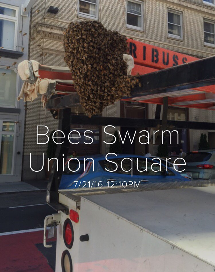 The scoop: 100,000 honey-making bees resided atop SF Clift Hotel & followed queen bee to find new home. normal