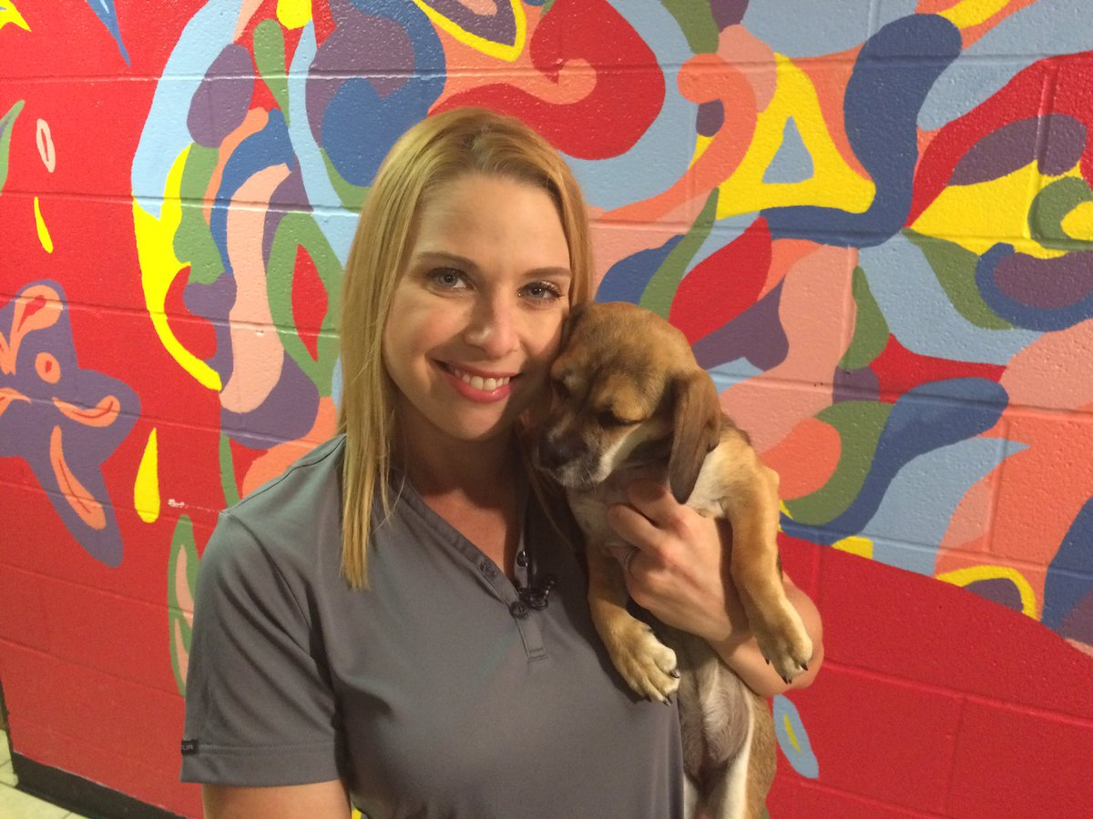 10 central Indiana shelters are waiving adoption fees to cleartheshelters. all info here!