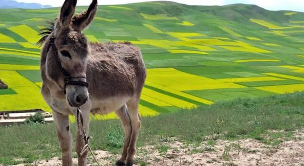 Donkey milk is the newest health trend