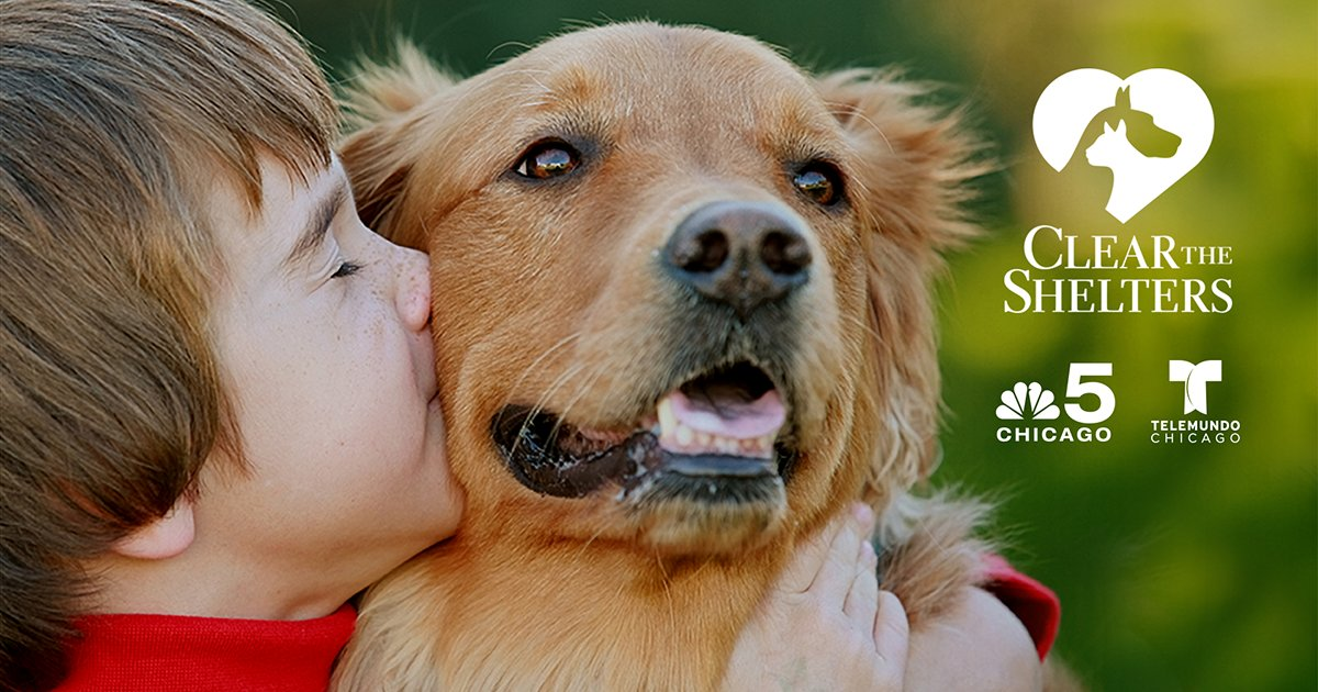 Today's the day! It's time to ClearTheShelters and bring home a new member of your family