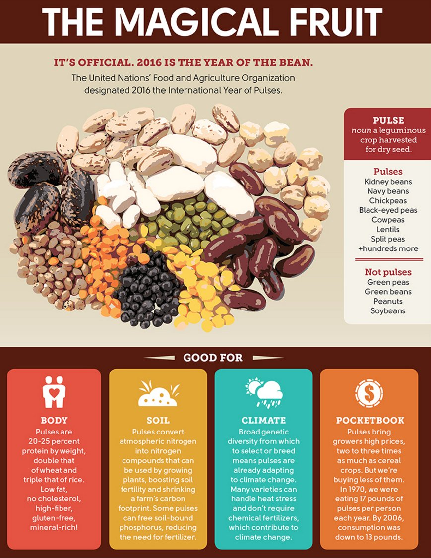 Image result for pulses infographic