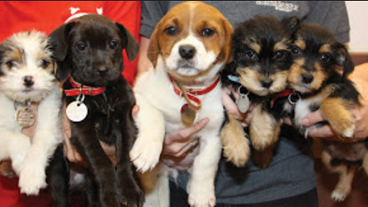 Be sure to check out our ClearTheShelters live puppy cam!