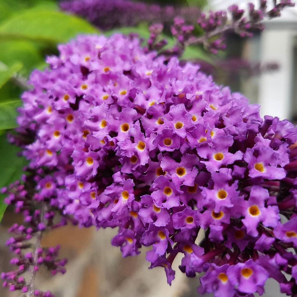 Twitter Jessica Roberts Such Pretty Little Flowers Anyone