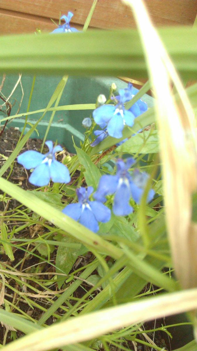 Flowerid hashtag on twitter flowerid hashtag on twitter izmirmasajfo