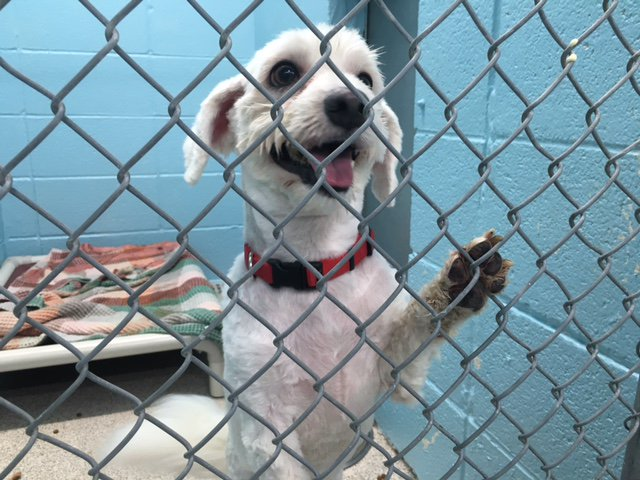 This cutie is waiting for a new family at the Dupage County Animal Care & Control