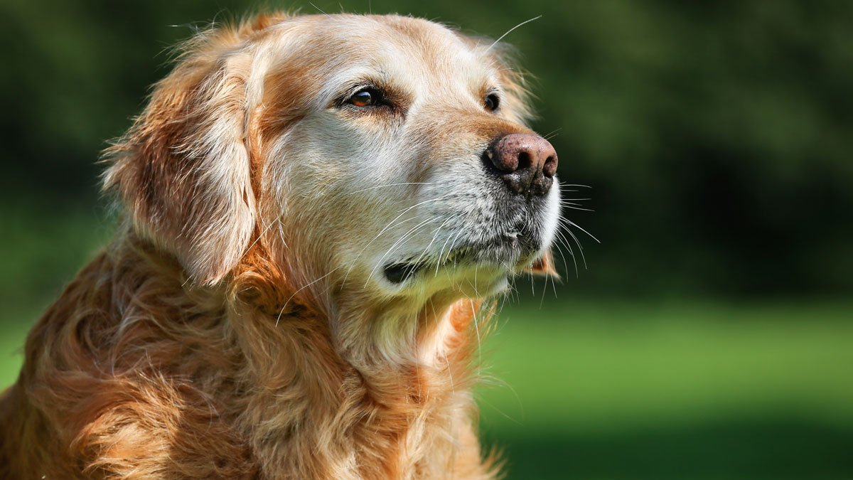 Why you should consider adopting an older pet during ClearTheShelters