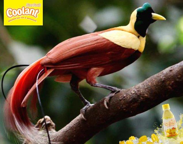 Coolant Ar Twitter Kamu Hebat Banget Kalau Bisa Tebak Burung Cendrawasih Merah Ini Ada Di Mata Uang Nominal Berapa D