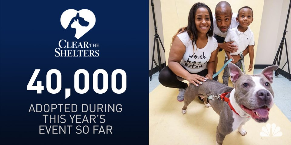 Wow! CleartheShelters has helped 40K pets get adopted! Did you take a new friend home?
