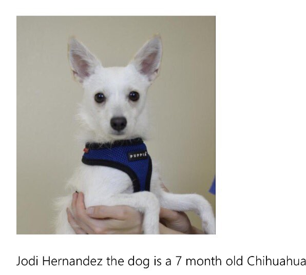 This Chihuahua, named after me, needs a home. Will you adopt Jodi Hernandez? cleartheshelters