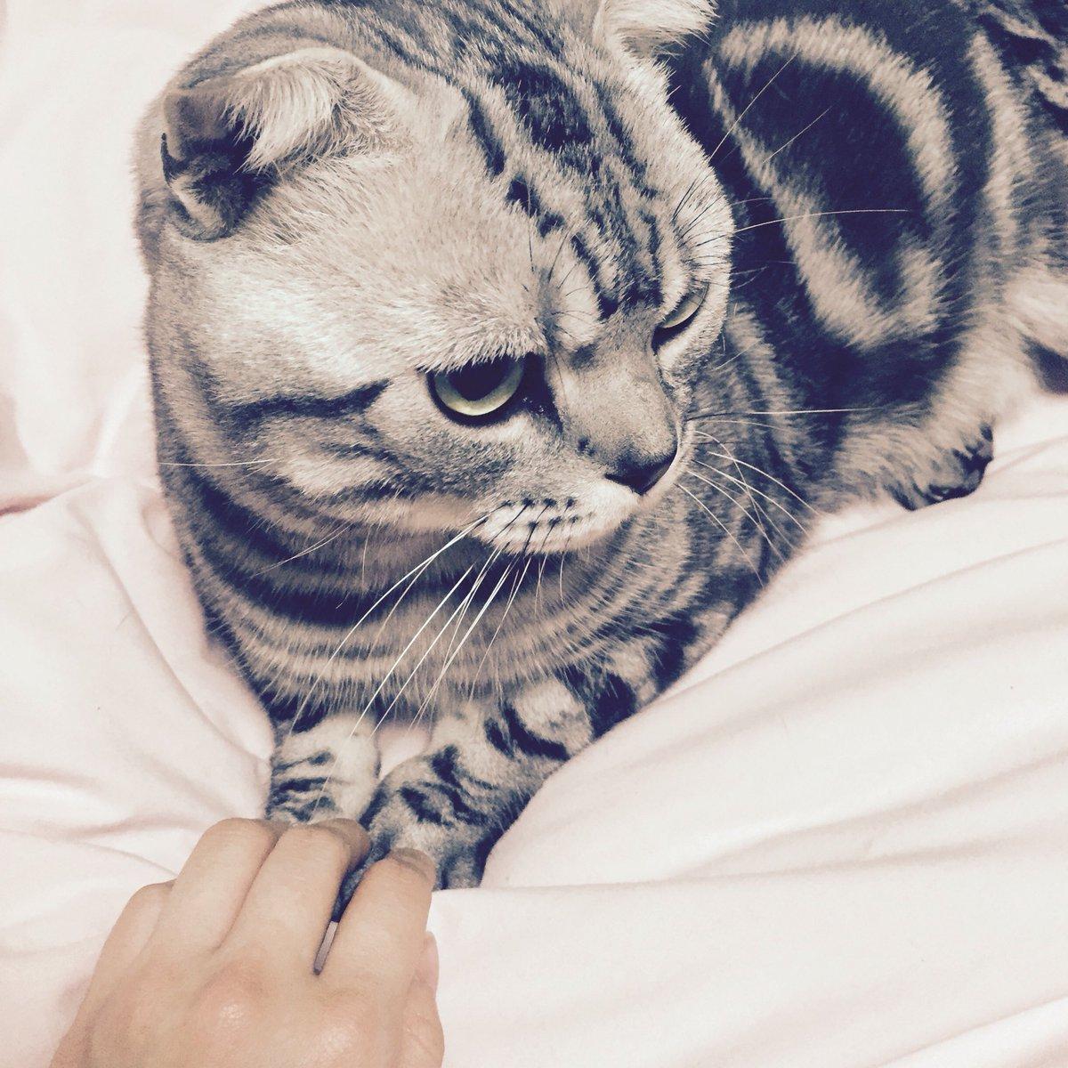 二日間の泊まりから帰ってきたら、猫様がベッドの主人になってる。。猫あるある。おはようございます。#猫 #cat #ビス pic.twitter.com/L89Ymsn2NY