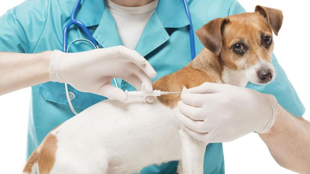 Find out how to get your pet microchipped for only $5 this week.
