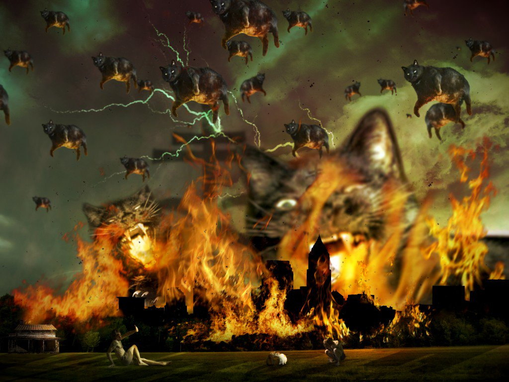 картинки коты апокалипсиса делится