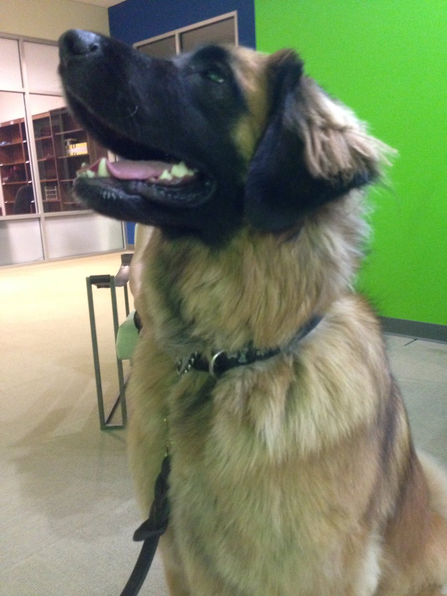 Who's a good dog? Max is! Tune in at 8:20 to find out how to keep your pup safe during hot weather. @cbwcarmel