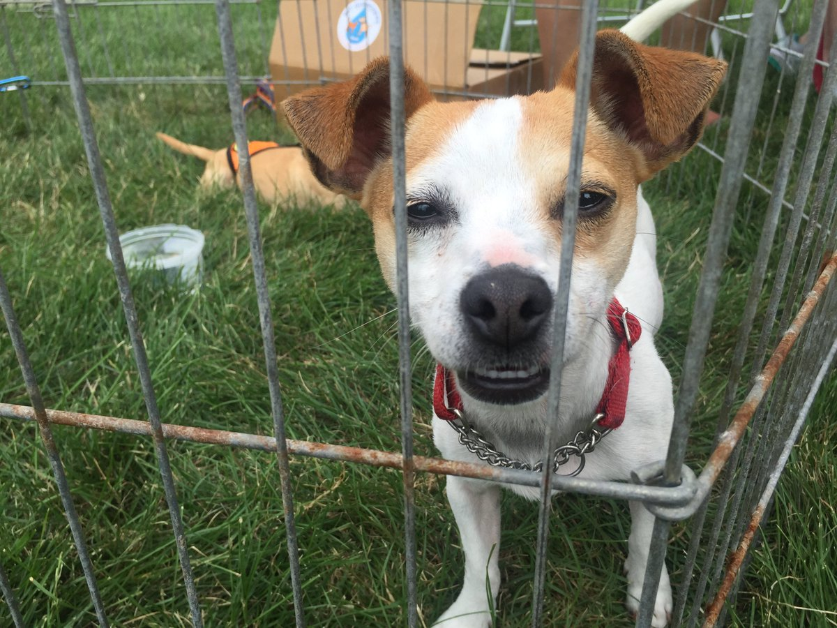 Check out some of the amazing adoption stories from ClearTheShelters in the Chicago area