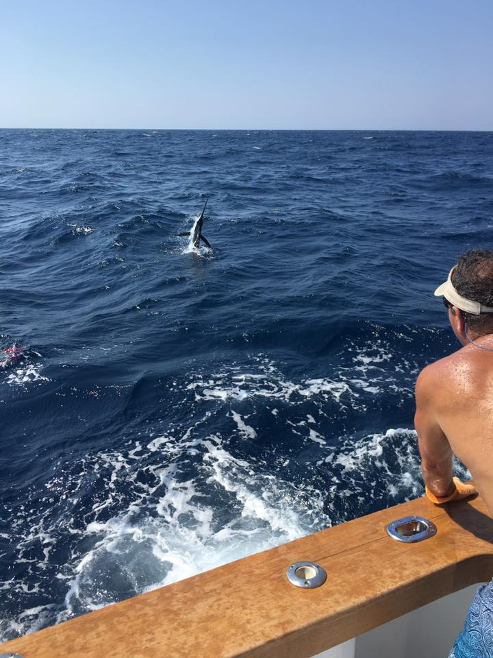 Manteo, NC - Sandra D released 6 White Marlin and a Blue Marlin.