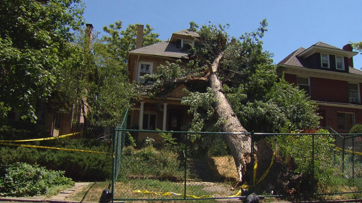 Giant Tree Crashes Onto Home, Displaces 5 Residents