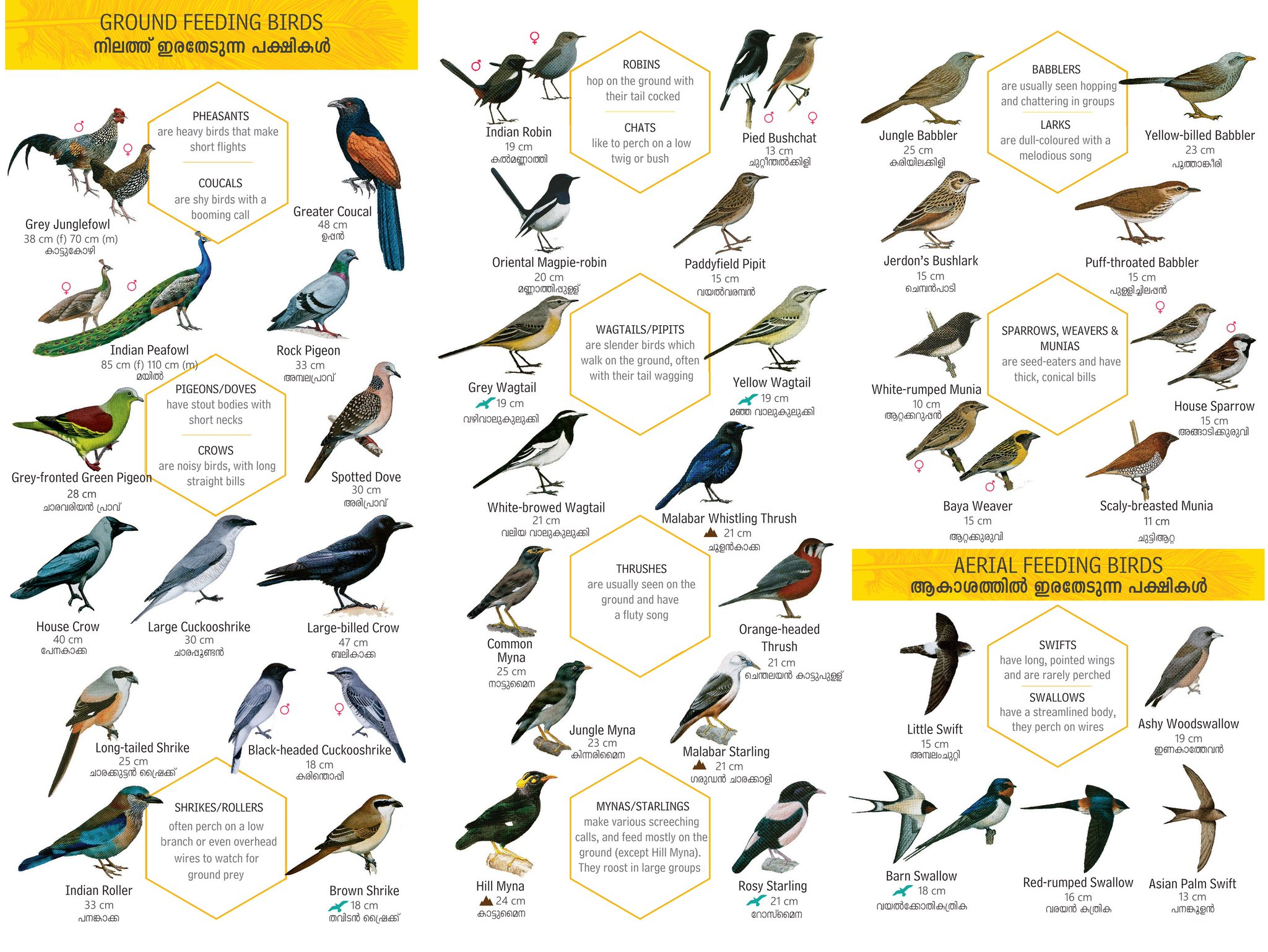 Nature Conservation Foundation On Twitter Featuring 135 Birds It Has Descriptions In English And Species Names In English And Malayalam