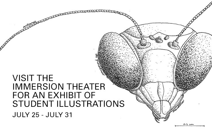 BIOLOGICAL ILLUSTRATIONS, exhibit of student work, #HuntLibrary, iPearl Immersion Theater https://t.co/tesqrQmhnB https://t.co/J0T1L4I837