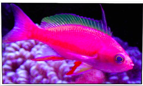 Pet fish for sale petfishforsale twitter for Fish and pets unlimited