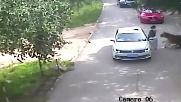 GRAPHIC VIDEO: Tiger mauls woman to death at wildlife park