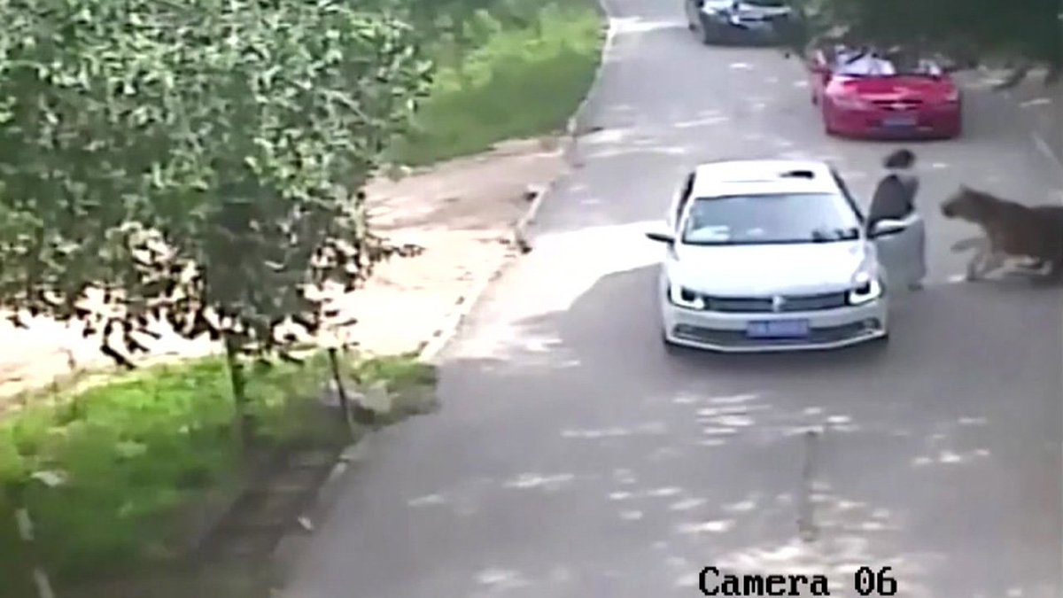 GRAPHIC VIDEO: Tiger mauls woman to death at wildlife park -