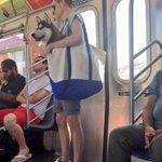 ペットと電車に乗り込むアメリカ人自由すぎ!