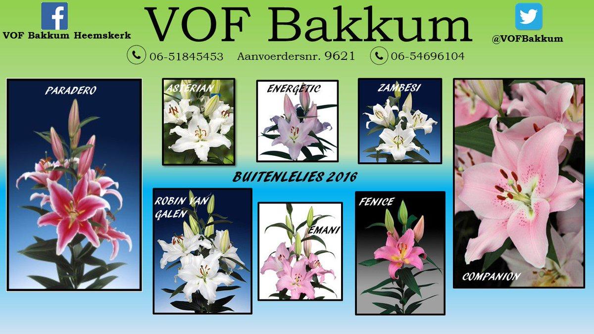 Bakkum Flowers Heemskerk On Twitter Voor Elke Gelegenheid Een