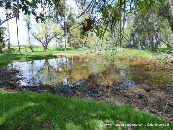 A este ecosistema @EnriquePenalosa le llama potrero. Fotos del Humedal Bosque las Lechuzas en Reserva Van der Hammen