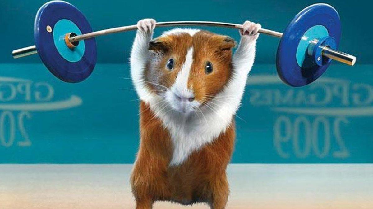 Открытка для, прикольные картинки животных в спорте