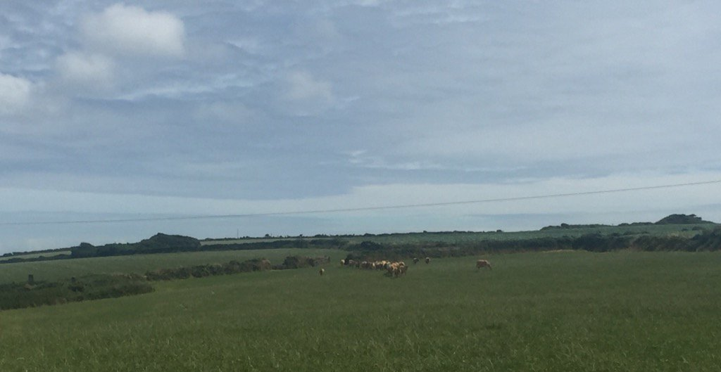 Wandering through stunning fields....cows coming home for milking...just so peaceful @ILoveCornwallUK x https://t.co/kDiUAUPBOf