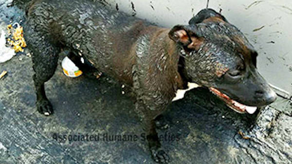 Dogs rescued from scorching hot tar roof