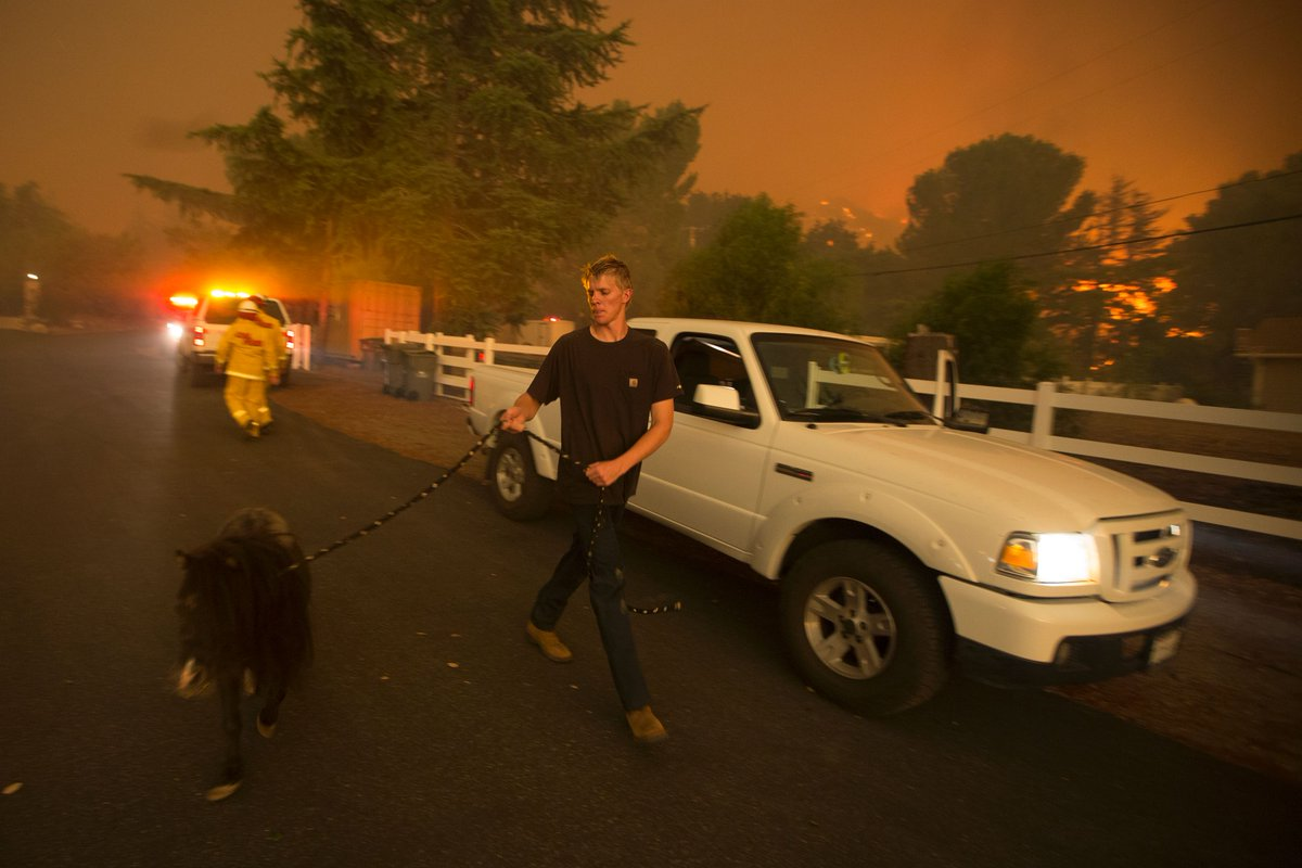 Horses, goats, chickens, pigs, even a Brahma bull, still under Sand Fire evacuation orders