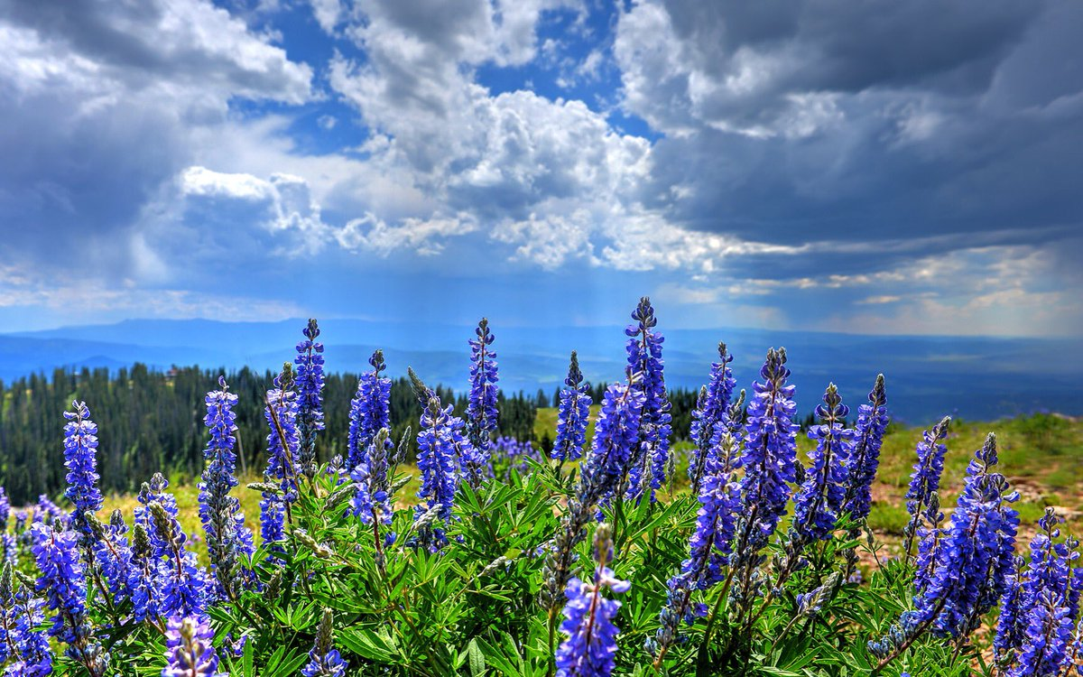 A wild and wonderful view from the top of Mt. Werner. Pic by Larry Pierce. @SteamboatCO @9NEWS 9wx