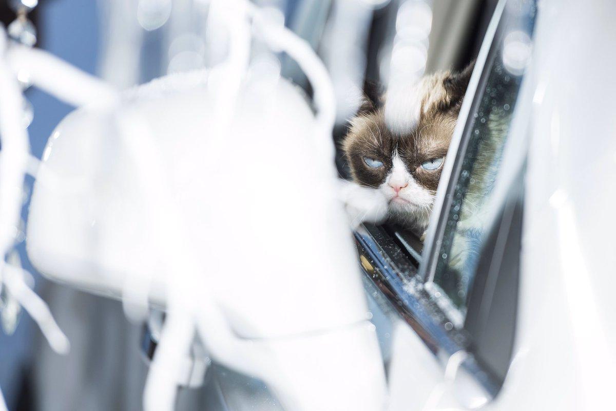 "grumpy cat on twitter: ""worst photo shoot ever with @ellenvunwerth"