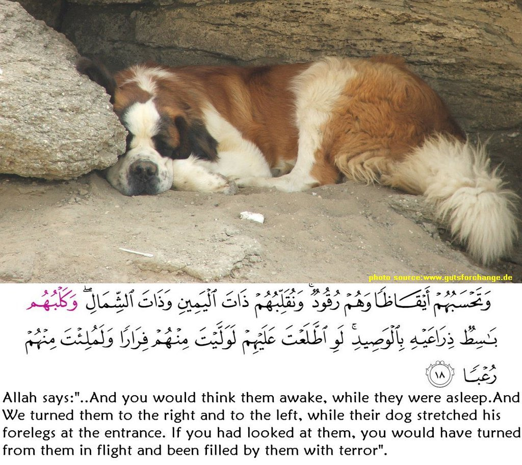 The Animals in the Quran ...