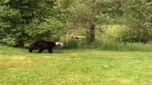 Man with lasso saves bear with cheese ball container stuck on head