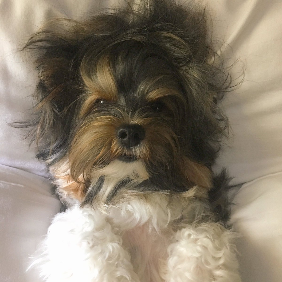 Lead with love the rest will follow, if not today then certainly tomorrow. It's the Philosophy of FattieButters. #犬 https://t.co/4NrCLKxQTs