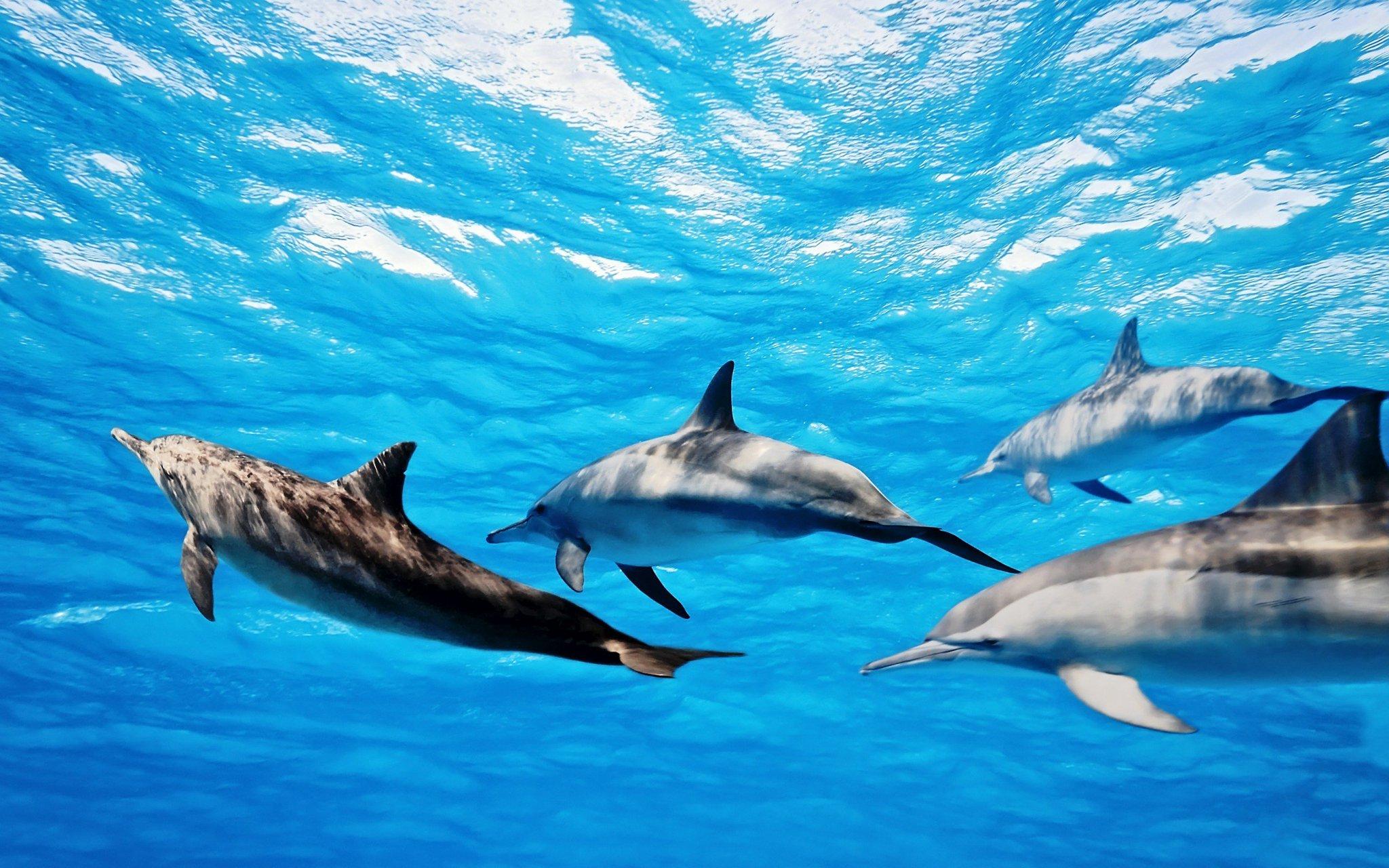 Картинки, картинки на рабочий стол дельфины красивые большие на весь экран