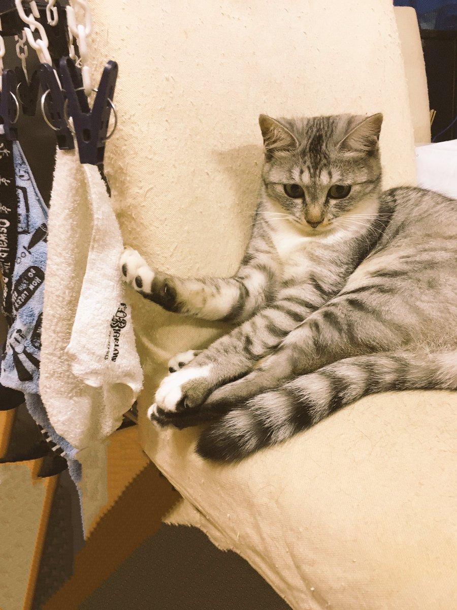 サバ身「たわむれに洗濯物にじゃれついてたら爪が引っかかり取れなくなりましてん…もうかれこれ一時間はご主人が通りかかるのを待ってたんやで」 pic.twitter.com/eaQRCvYIcZ