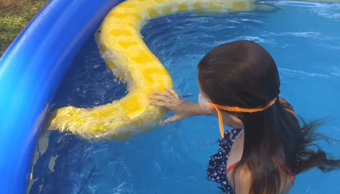 This is nuts: Video shows child swimming with rare albino Burmese python