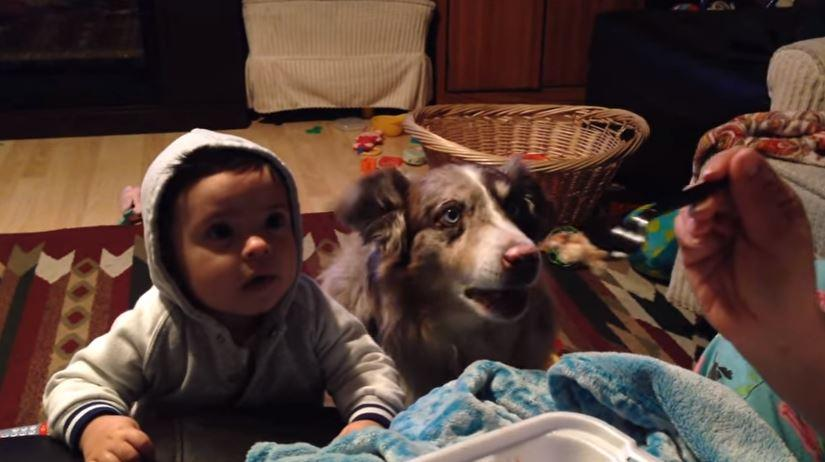 Dog says 'mama' for a chance at takeout food