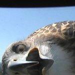 お天気カメラに興味津々なタカwお茶目な表情に思わずキュンとしちゃいそう!